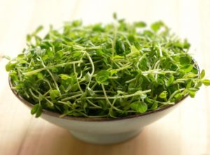 Read more about the article The Appeal of Pea Shoots and Micro Greens